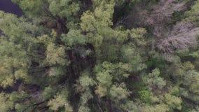 Летающ над рекой Desna около Киева, Украина вид с воздуха видеоматериал