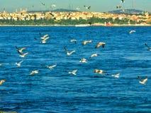 Летающ на Bosfor, Стамбул стоковые изображения rf