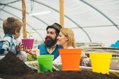 летели счастливая работа семьи на flowerbed концепция flowerbed парника flowerbed с молодыми заводами зеленый цвет думает стоковое изображение rf