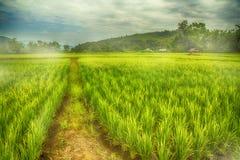 Летели рис, который Стоковое Изображение