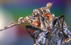 Летите, падения воды, влажные, дождь, макрос, большие глаза мухы стоковое изображение