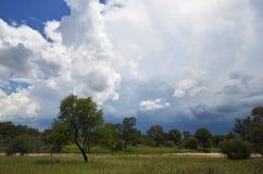 Летнее время в Намибии Стоковые Фотографии RF