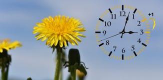 Летнее время DST Настенные часы идя к зимнему времени стоковые фото