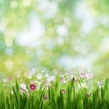 Летний день красоты, абстрактный сельский ландшафт Стоковая Фотография