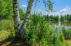Летний день на озере леса стоковое изображение