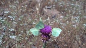 Летний день с зелеными бабочками видеоматериал