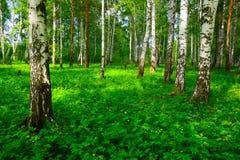 Летний день в красивом лесе Стоковые Изображения RF