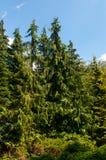Летний день леса солнечный Стоковое фото RF