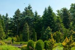 Летний день леса солнечный Стоковая Фотография RF