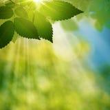 Летний день красоты в лесе Стоковые Фотографии RF
