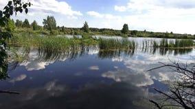 Летний день реки солнечный акции видеоматериалы