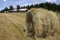 Летний день Haymaking солнечный, сено свертывает на свеже накошенном поле Стоковые Изображения