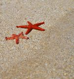 Летний отпуск - красная морская звёзда Стоковое фото RF