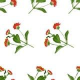 Лето акварели цветет безшовная картина Стоковое Фото