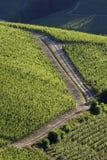 Лето ландшафта виноградника Стоковое фото RF