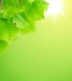 лето весны принципиальной схемы Стоковые Изображения