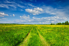 Лето весны - сельская дорога в зеленом lanscape пейзажа поля Стоковая Фотография