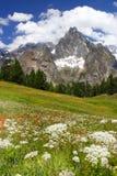 Лето в Альпах Стоковые Фотографии RF