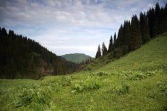 Лето в горах стоковые изображения