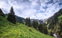 Лето в горах стоковое фото rf