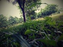 Лето в Нигерии стоковое фото rf