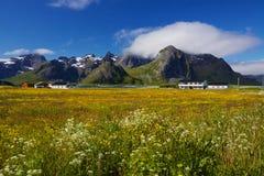 Лето в Норвегии стоковая фотография
