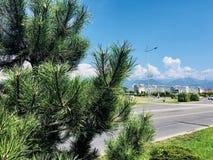 Лето в Сочи стоковое фото