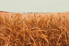 Лето в Украине Стоковое фото RF