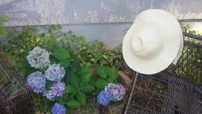 Лето гортензии Стоковые Фотографии RF
