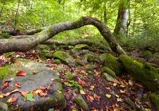 лето горы ландшафта зеленого цвета пущи одичалое стоковая фотография rf
