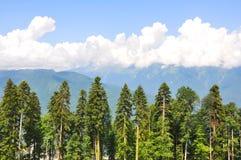 лето горы ландшафта Стоковое Изображение