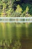 лето горы озера пущи Стоковое фото RF