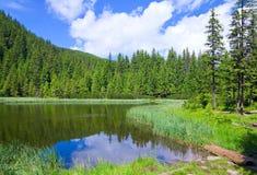 лето горы озера пущи Стоковое Изображение