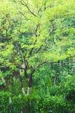 лето дождя Стоковые Изображения