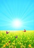 лето зеленого цвета glade дня Стоковое Изображение
