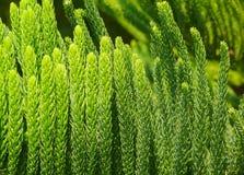 Лето зеленого растения Стоковые Изображения RF
