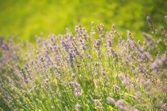Лето или весенний сезон стоковое изображение rf