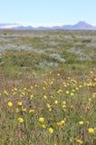 Лето Исландии Стоковые Изображения