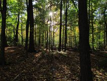 Лето и лес с тенями Стоковые Фотографии RF