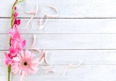 Лето и лепесток весны цветка гладиолуса пинка Gerbera украшают на белой деревянной предпосылке стоковое изображение rf
