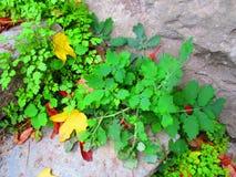 Лето и осень, Kamenets Podolskiy, Украина Стоковое Фото