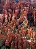 лето каньона bryce Стоковые Фотографии RF