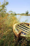 лето каня Стоковое Фото