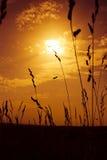лето конца Стоковое фото RF