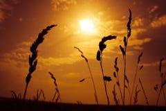 лето конца Стоковая Фотография RF