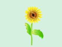 Лето красивого солнцецвета цветка яркое покрашенное Стоковое Фото