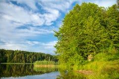 лето ландшафта озера пущи Стоковые Фотографии RF