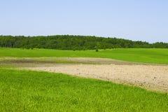 лето ландшафта сельское Стоковые Фотографии RF