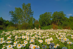 лето ландшафта солнечное Стоковое Фото