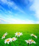 лето ландшафта стоцветов Стоковое Фото